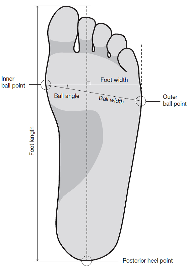 Ball Foot Diagram - Wire Data •